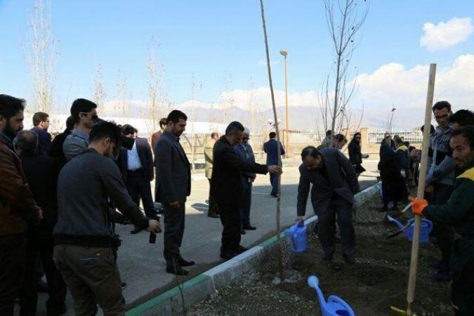 درختکاری در دانشگاه آزاد اسلامی شهرستان قدس