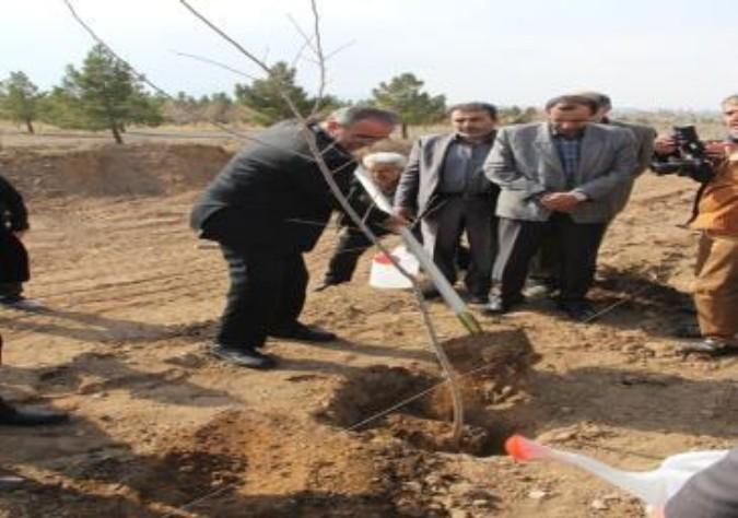 کاشت نهال در شهرک صنعتی دهک شهرستان ملارد بمناسبت هفته منابع طبیعی