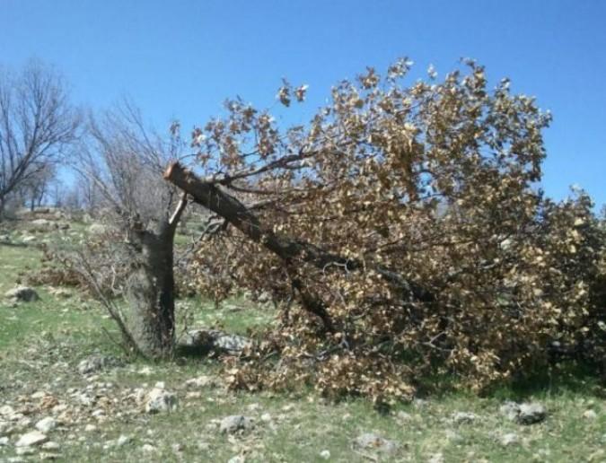 قطع ۲۳ اصله درخت در یکی از روستاهای ملارد