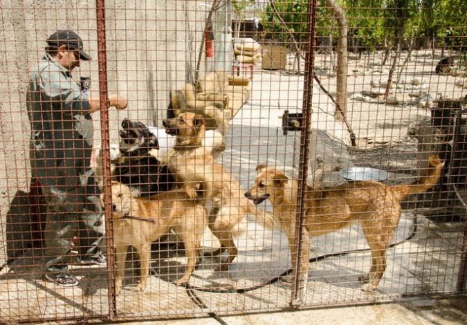 راه اندازی مرکز نگهداری سگ های ولگرد تا پایان سال در ملارد