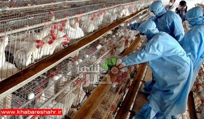 آمادگی برای مقابله با شیوع احتمالی آنفلوآنزای پرندگان