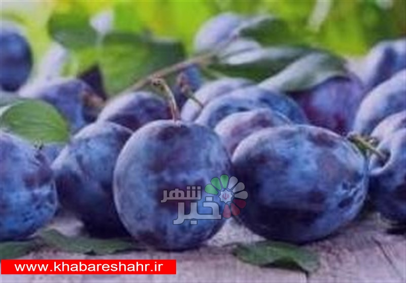 قیمت ۲ تا ۲۰ هزار تومانی انواع میوه در میدان مرکزی تهران + جدول
