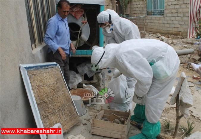 ۹ استان درگیر آنفلوآنزای حاد پرندگان/ تلاش برای مهار بحران تا ۱۴۰۰