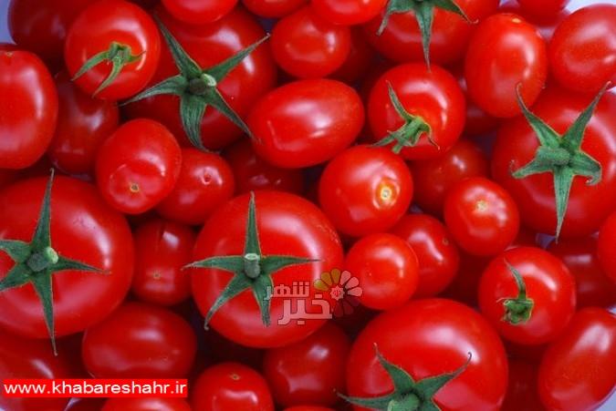 گوجهفرنگی بهزودی ارزان میشود