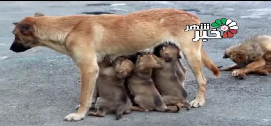درخواست حامیان حیوانات از دولت + فیلم