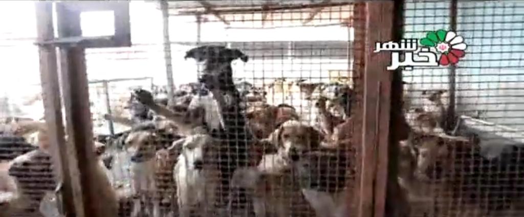 گزارش تکان دهنده از محل نگهداری سگها در شهریار + فیلم