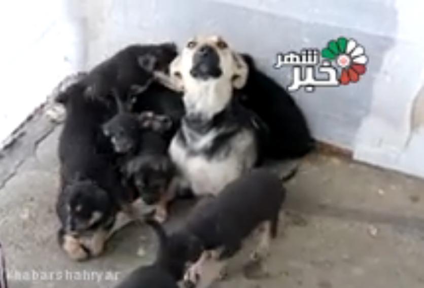16توله سگ متولد شده در یک زایمان در شهریار! +فیلم