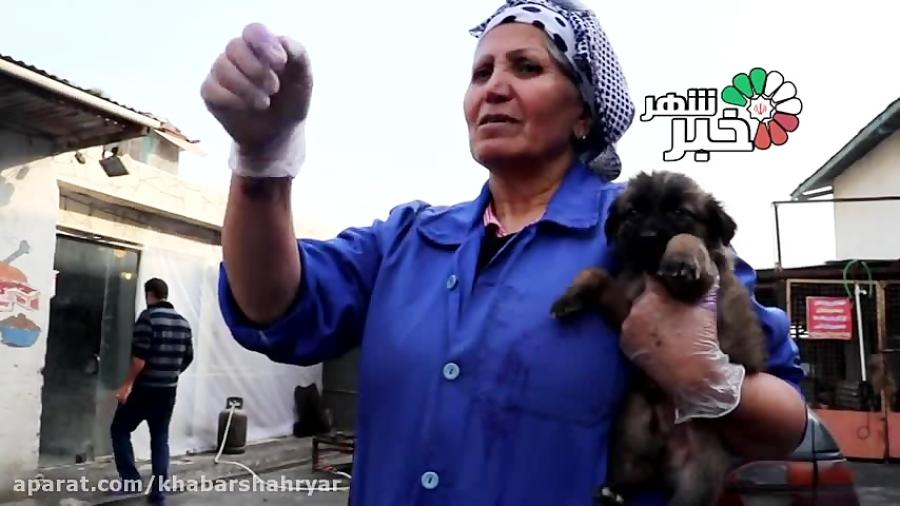 نجات زندگی زنی توسط سگها + فیلم