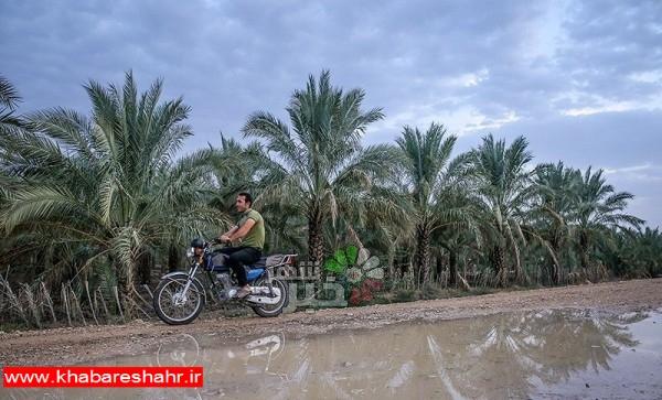 هواشناسی امروز ۹۷/۰۸/۲۰|رگبار، رعدوبرق و آبگرفتگی معابر عمومی ۶ استان را فرا میگیرد