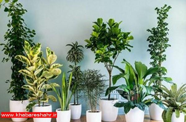 ارائه آموزشهای تکثیر گیاهان آپارتمانی به زنان در روستاهای ملارد