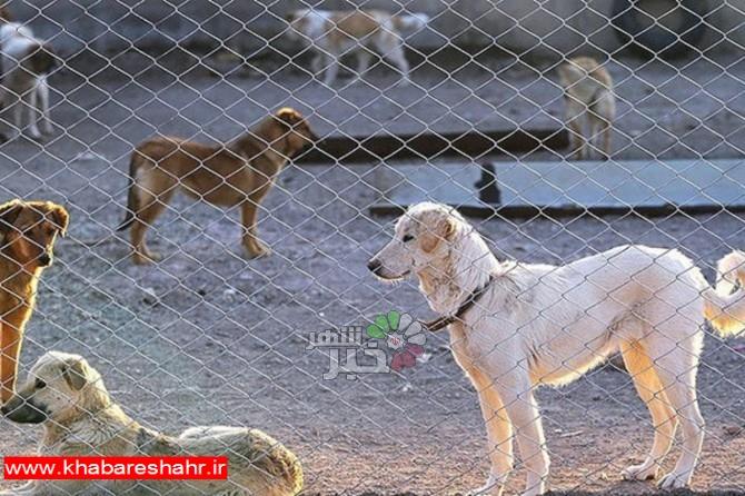 بررسی آخرین اقدامات شهرستان ملارد در کنترل جمعیت حیوانات ناقل بیماری