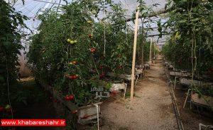 ۸ درصد محصولات کشاورزی استان تهران به خارج صادر میشود