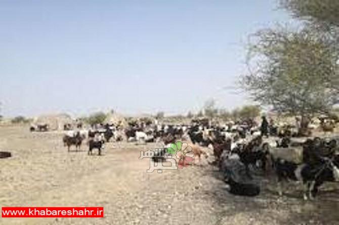 تشکیل جلسه کارگروه عشایری شهرستان ملارد برگزار شد