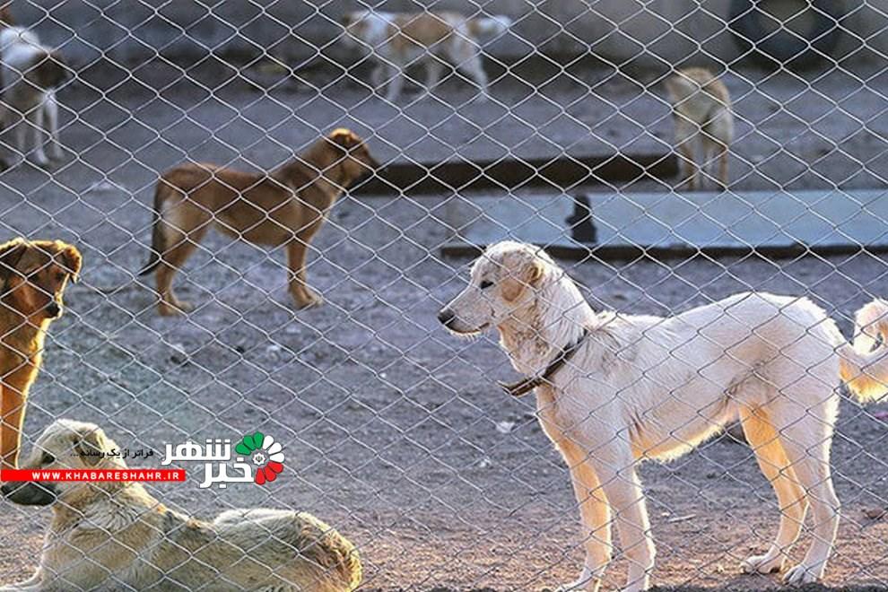 وعده سرپرست شهریار برای جمع آوری سگهای ولگرد
