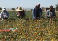 پرداخت تسهیلات بلاعوض به کشاورزان سیلزده