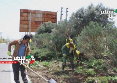 کارگران فضای سبز شهرداری بدون تجهیزات ایمنی مقابله با کرونا مشغول کارگروهی + فیلم