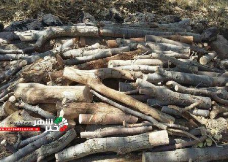کشف ۱٫۵ تن چوب قاچاق در جنوب غرب پایتخت