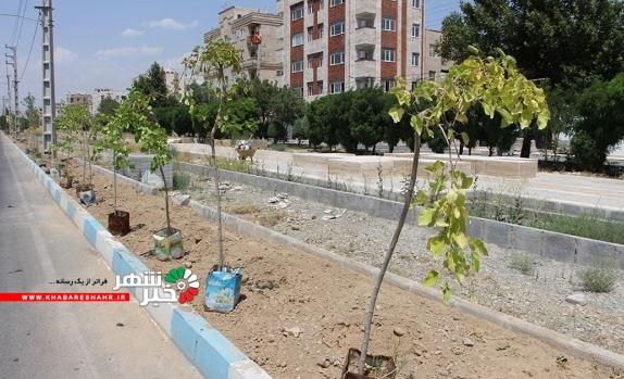 کاشت نهال وگونه های گیاهی در سطح شهر