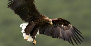 محکومیت یک متخلف زیستمحیطی به دلیل نگهداری غیرقانونی عقاب